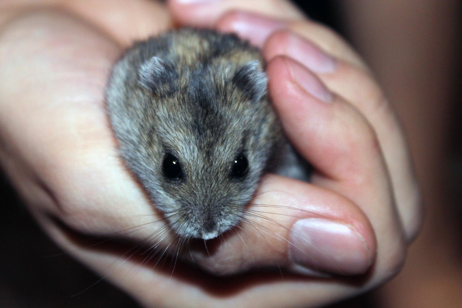 Médiation animale pour les particuliers et les instituts