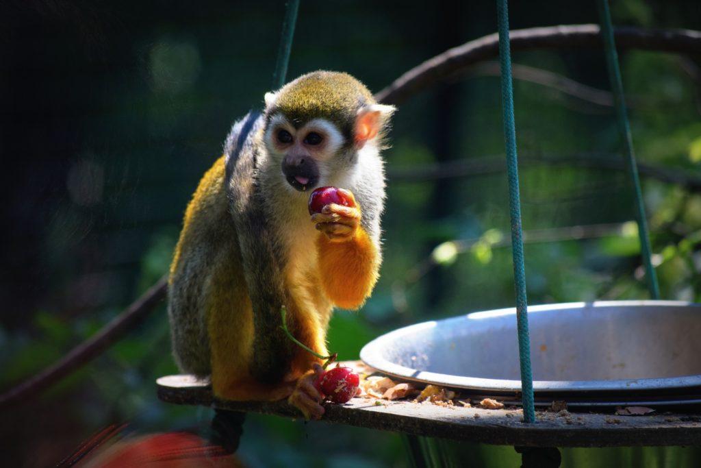 nourrir singe conflits sociaux