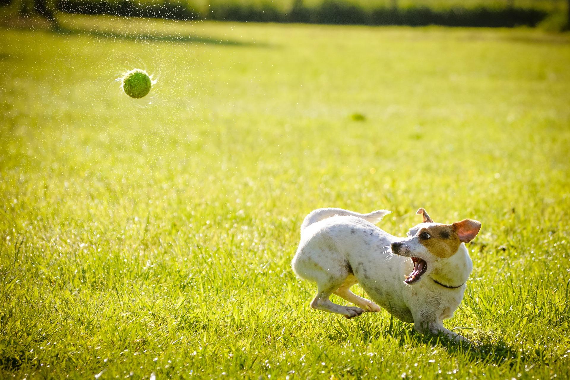 prédation chien et imprégnation