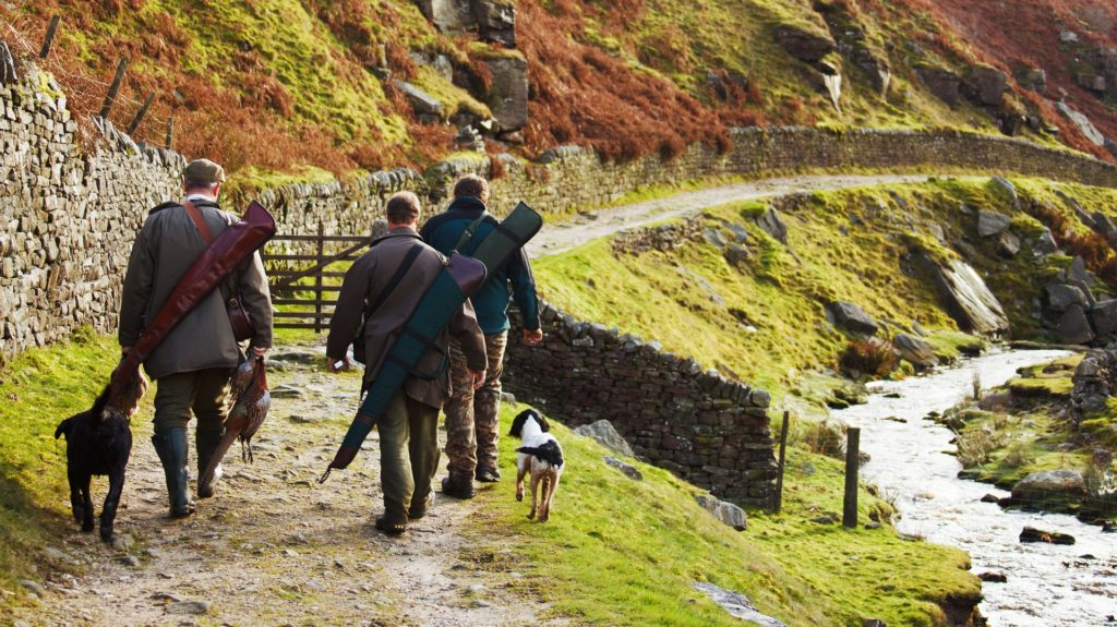chien choisir son itinéraire en période de chasse