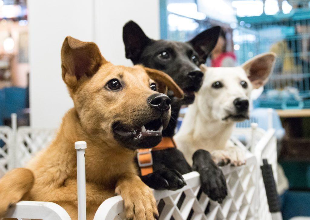 chien adoption à quel âge démarrer son éducation