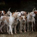 Chasse : randonner avec son chien en sécurité à cette période