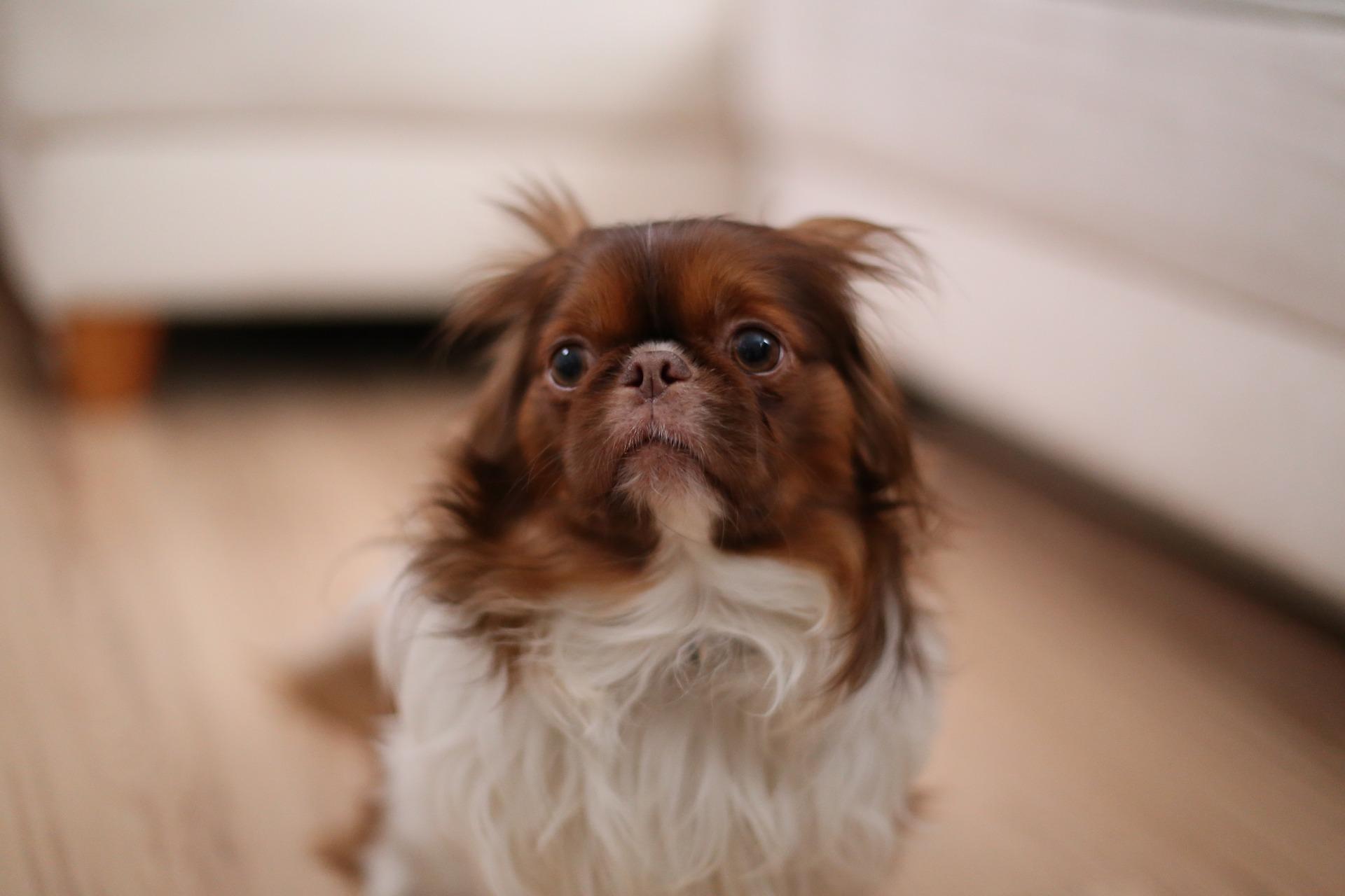 peur chien réflexes de défense
