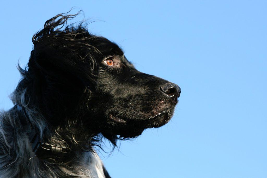 chien reglementation promenades
