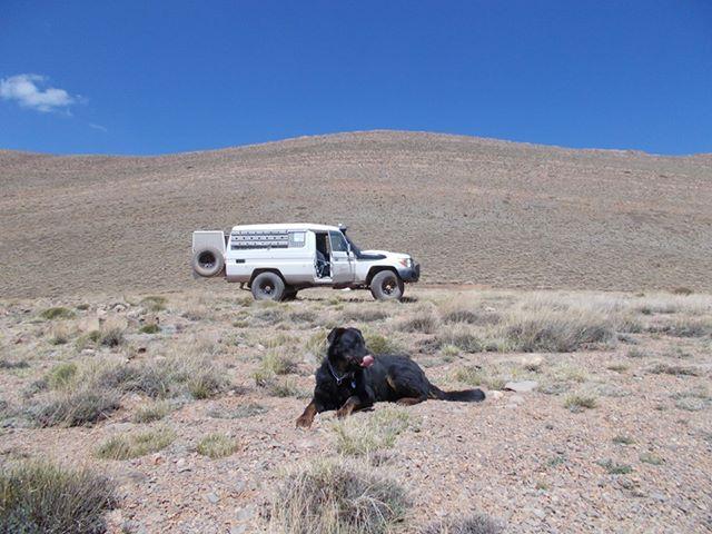 Road-trip chien : choisir la saison du voyage