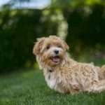 Prendre soin de son chien : les soins vétérinaires (3/3)