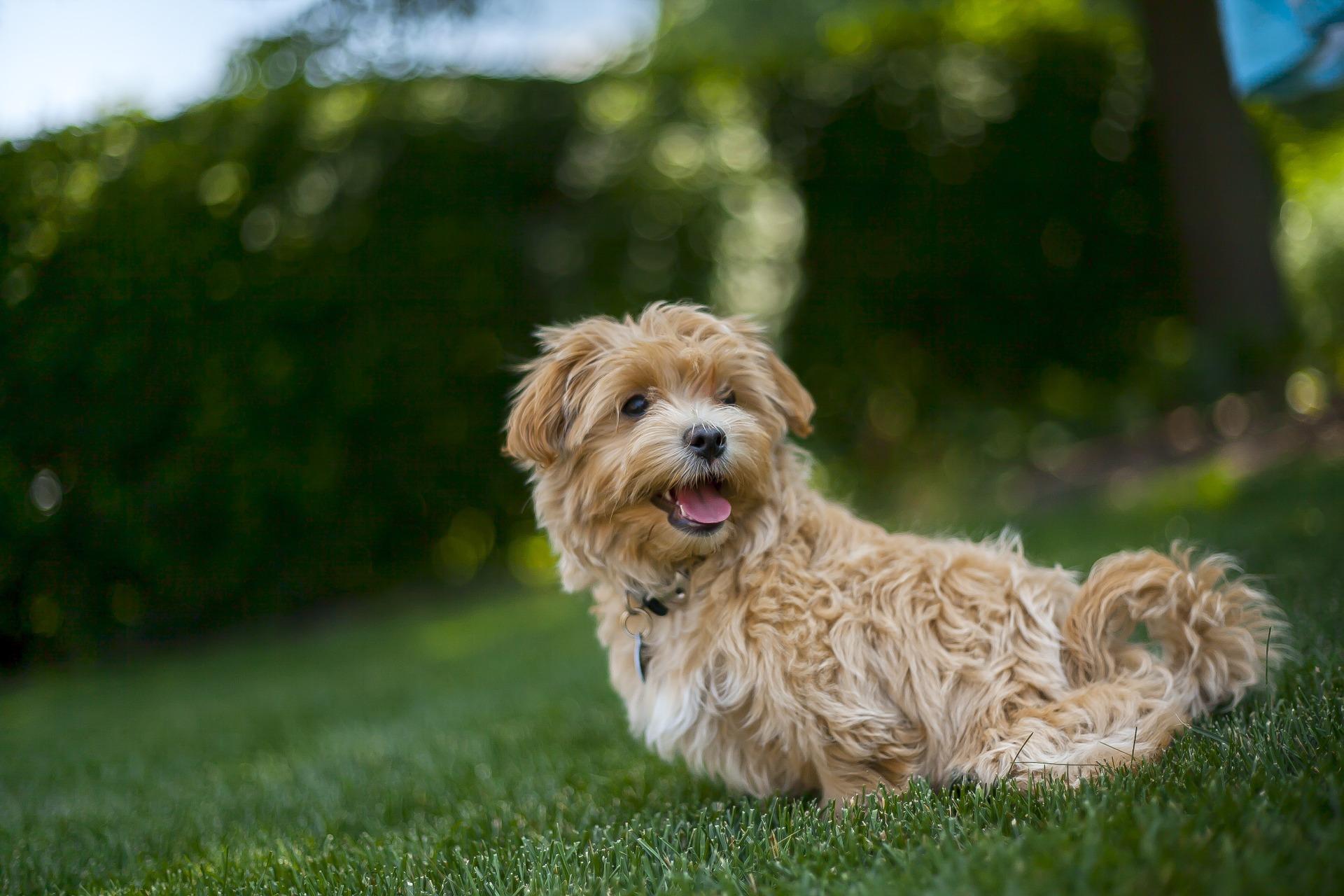 chien santé vétérinaire