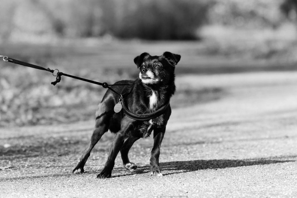 peur chien et B.A.T
