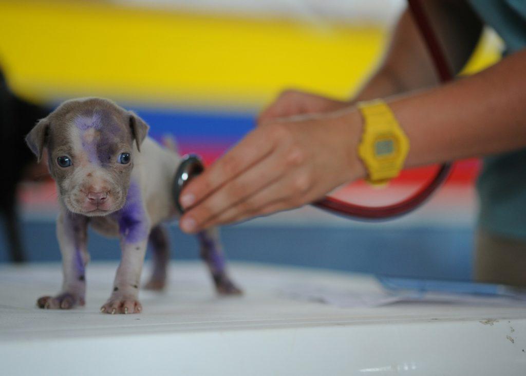 chien santé vétérinaire vaccinations