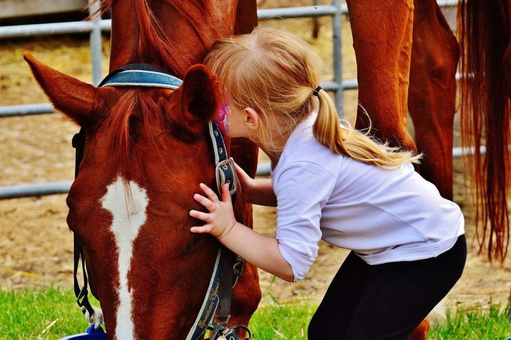 interventions variées pour la médiation animale
