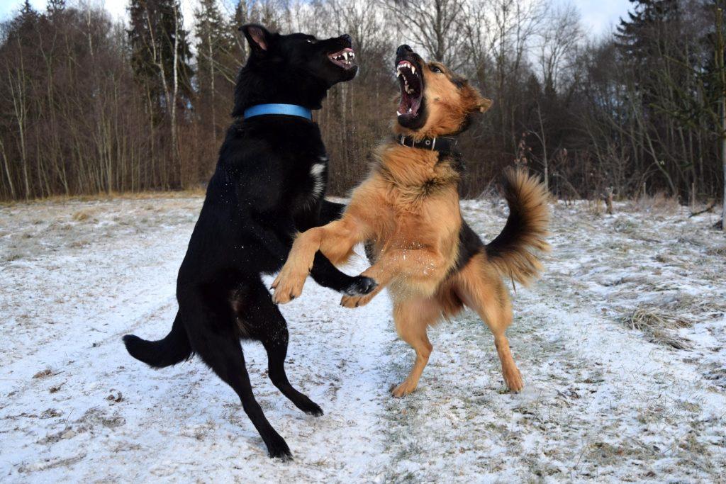 Types d'agression chez le chien