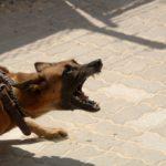 Chien agressif : les différents déclencheurs