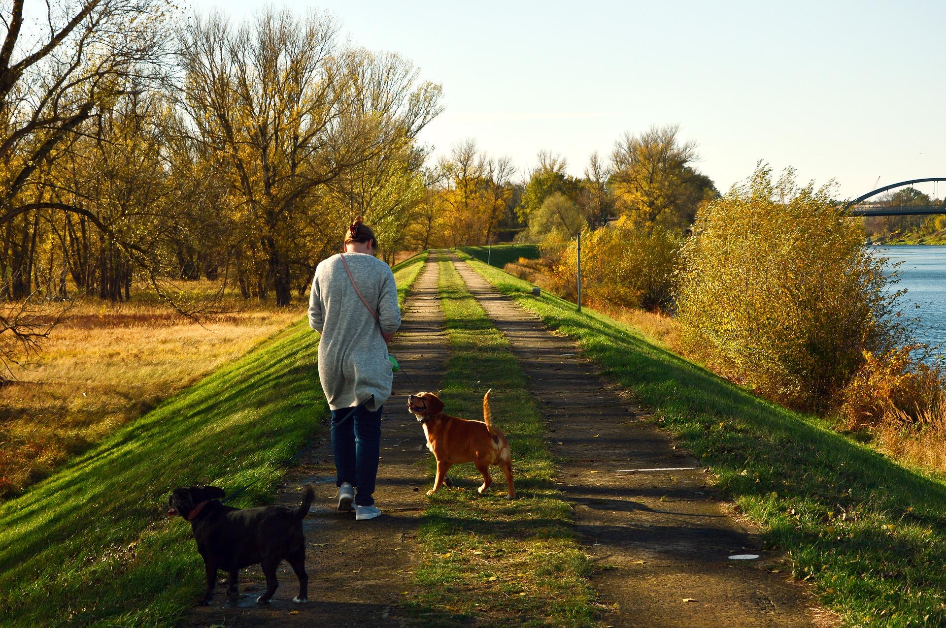 Cynophobie ou peur des chien