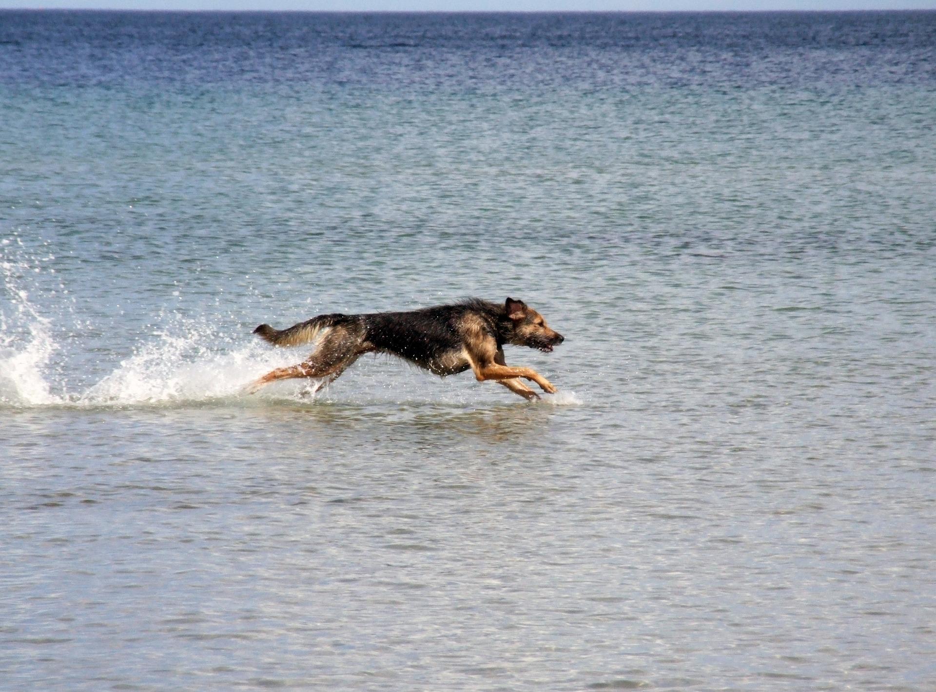 5 sens du chien et communication inter-espèce