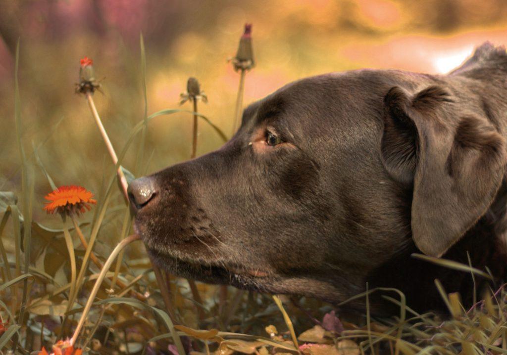 chien 5 sens et communication