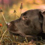 Les 5 sens : observer ceux des chiens pour mieux communiquer