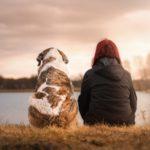 Comment réagir quand on a peur des chiens