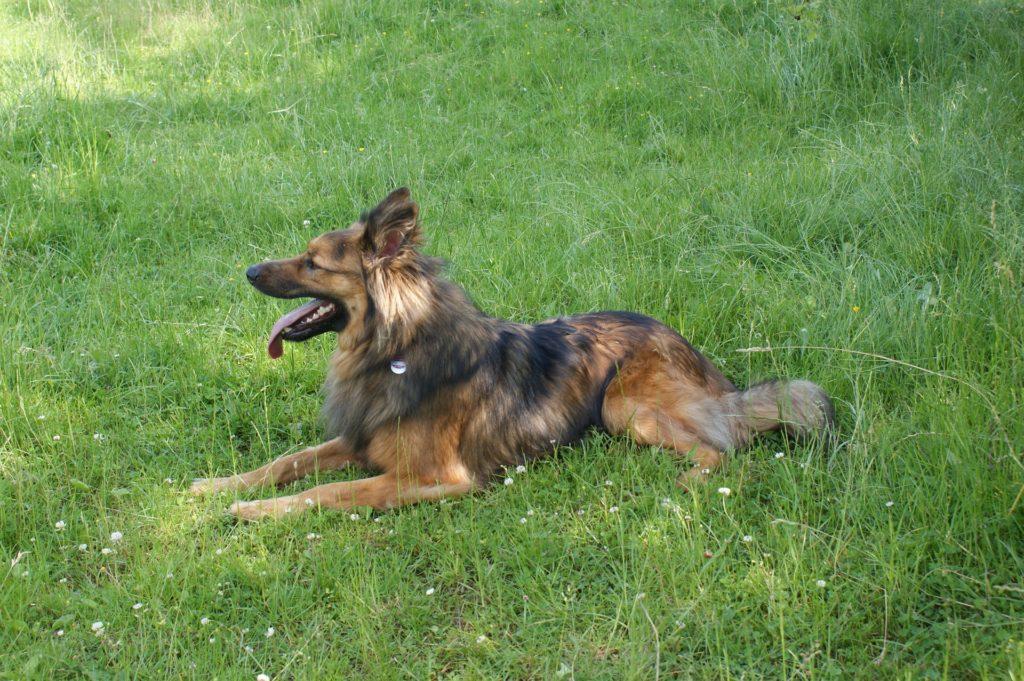 lire nos chiens et leurs 5 sens