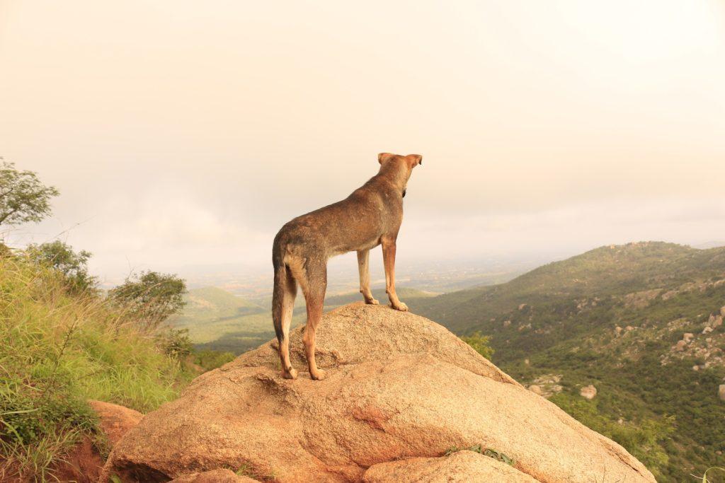 Obligations légales pour voyager avec un chien