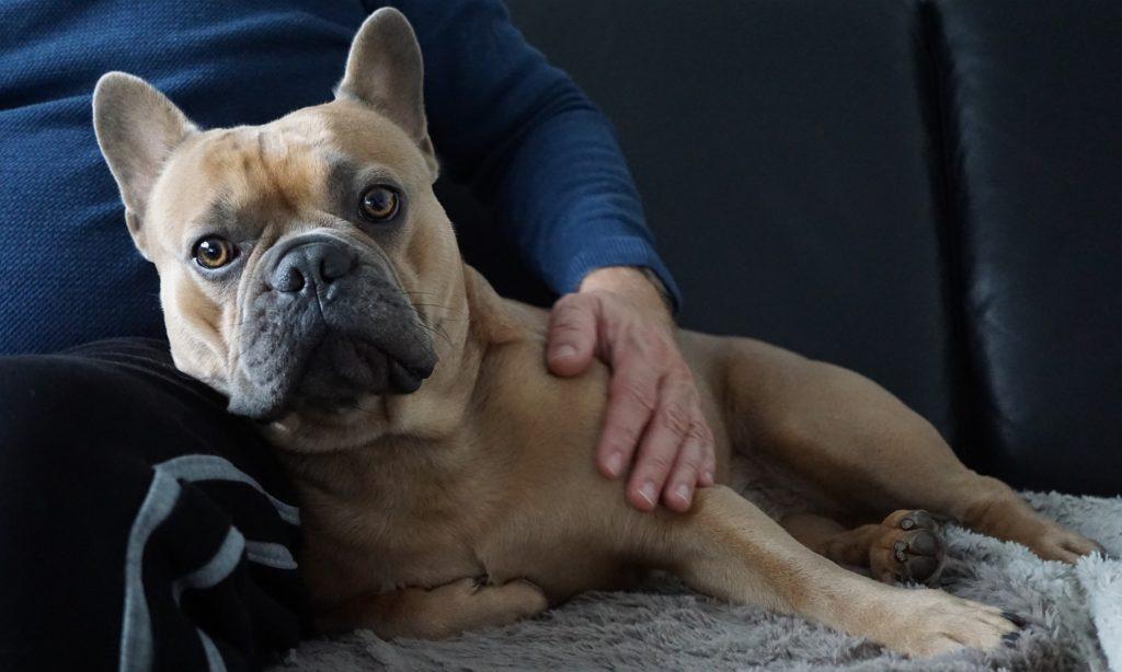 Déroulement d'une séance d'ostéopathie animale