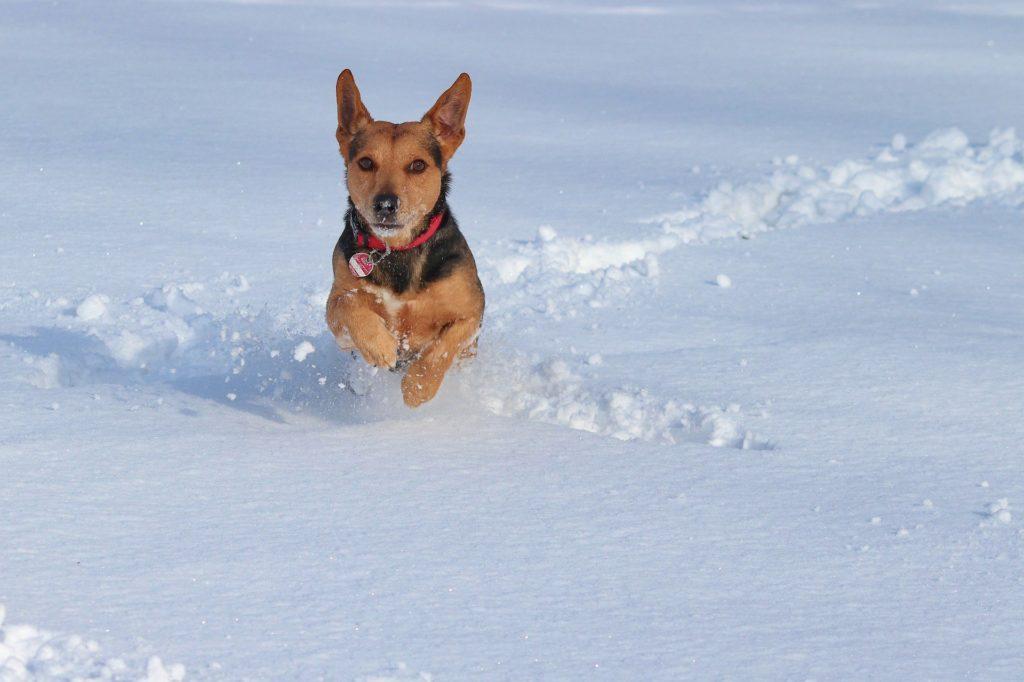 Matériel du chien en hiver