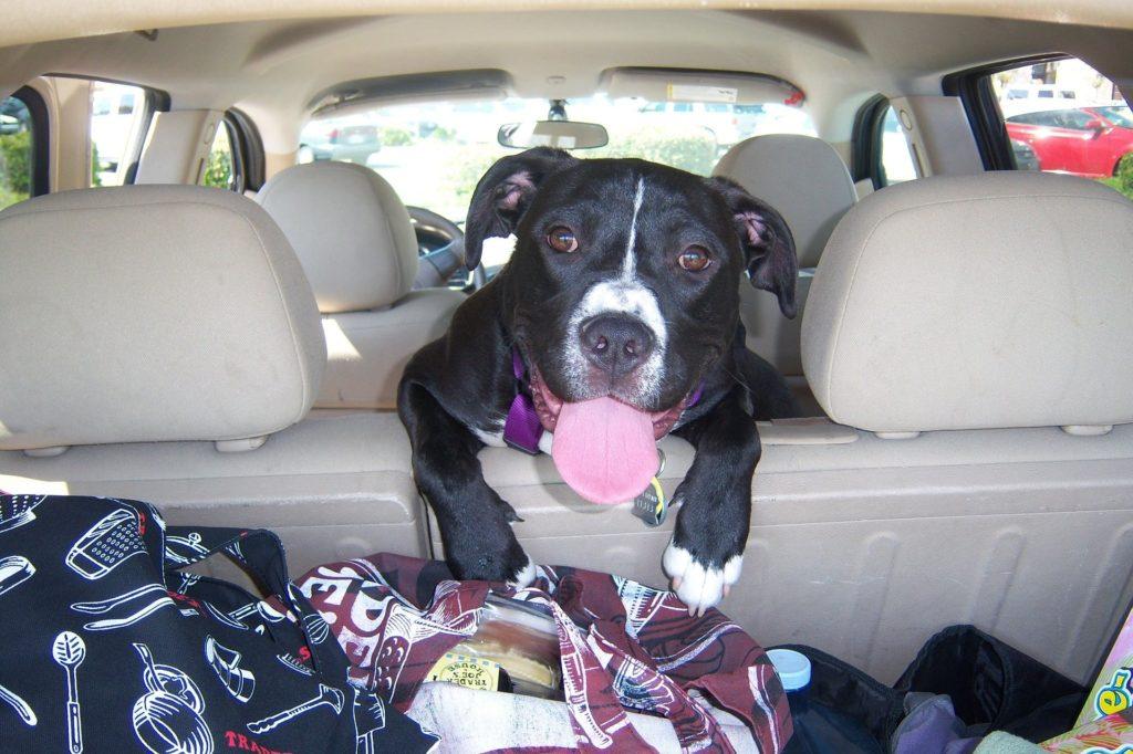 chien en road-trip