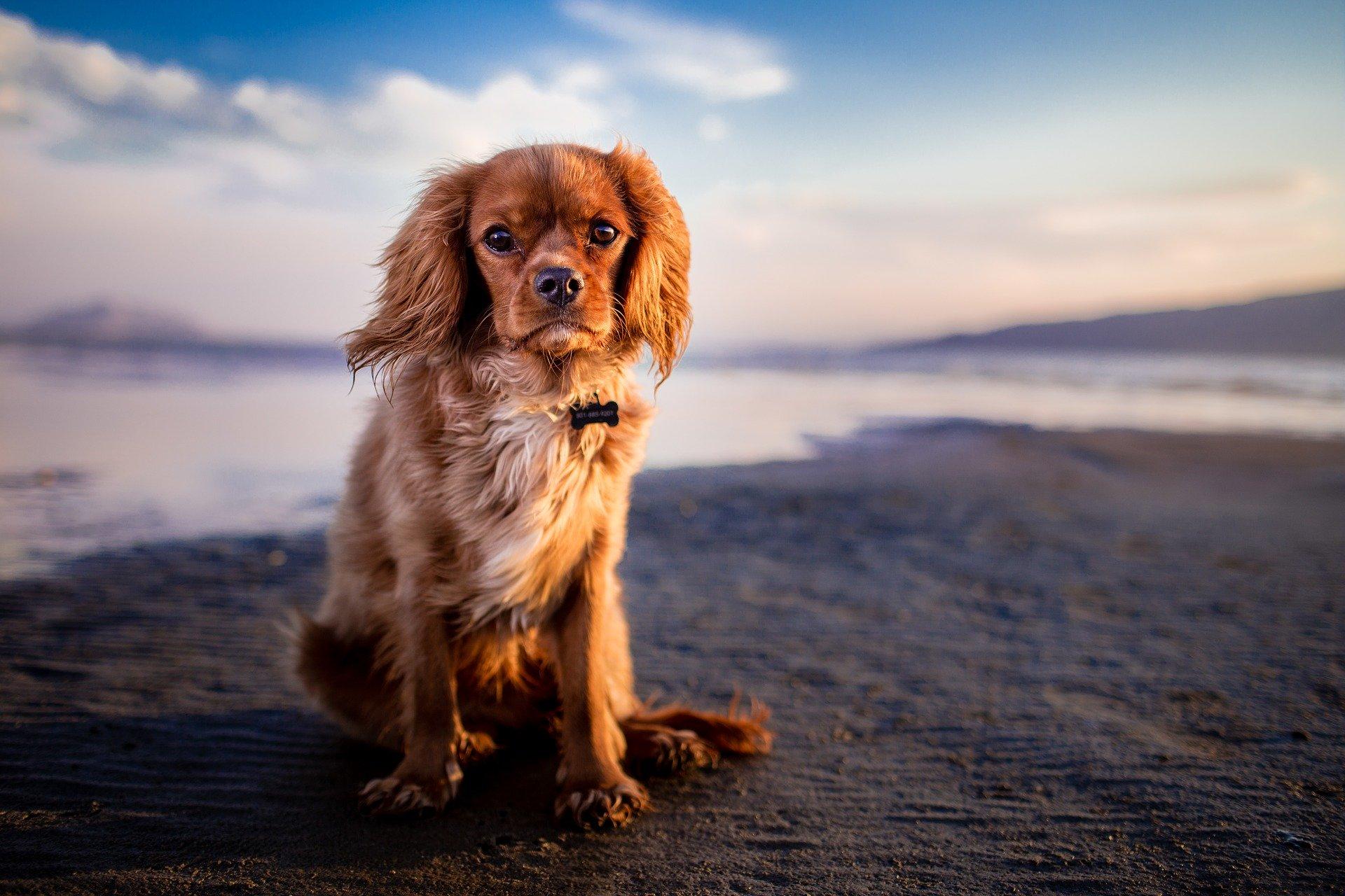 Matériel du chien en été