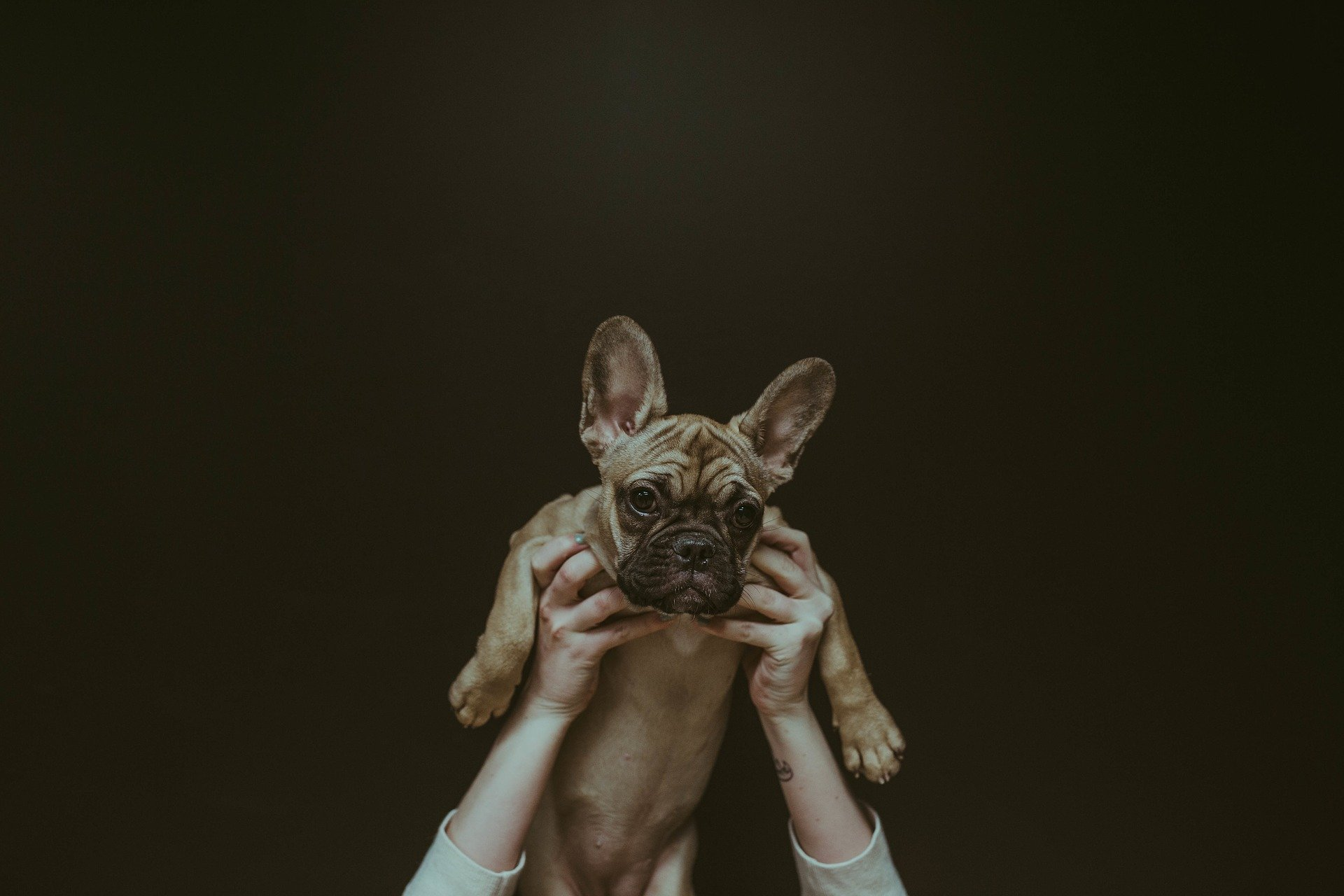 ne pas porter un chien par les aisselles