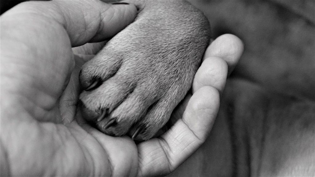 L'ostéopathie appliquée aux chiens