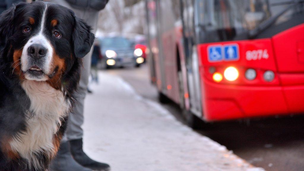 Matériel pour chien en transport en commun