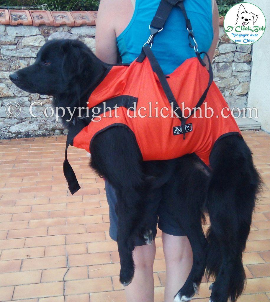 harnais de portage chien