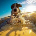 Matériel pour chien aventurier