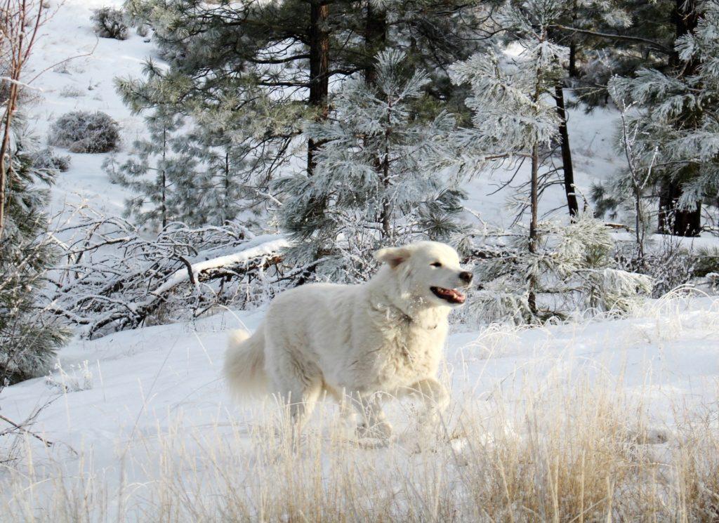 Chien en liberté versus chien en divagation