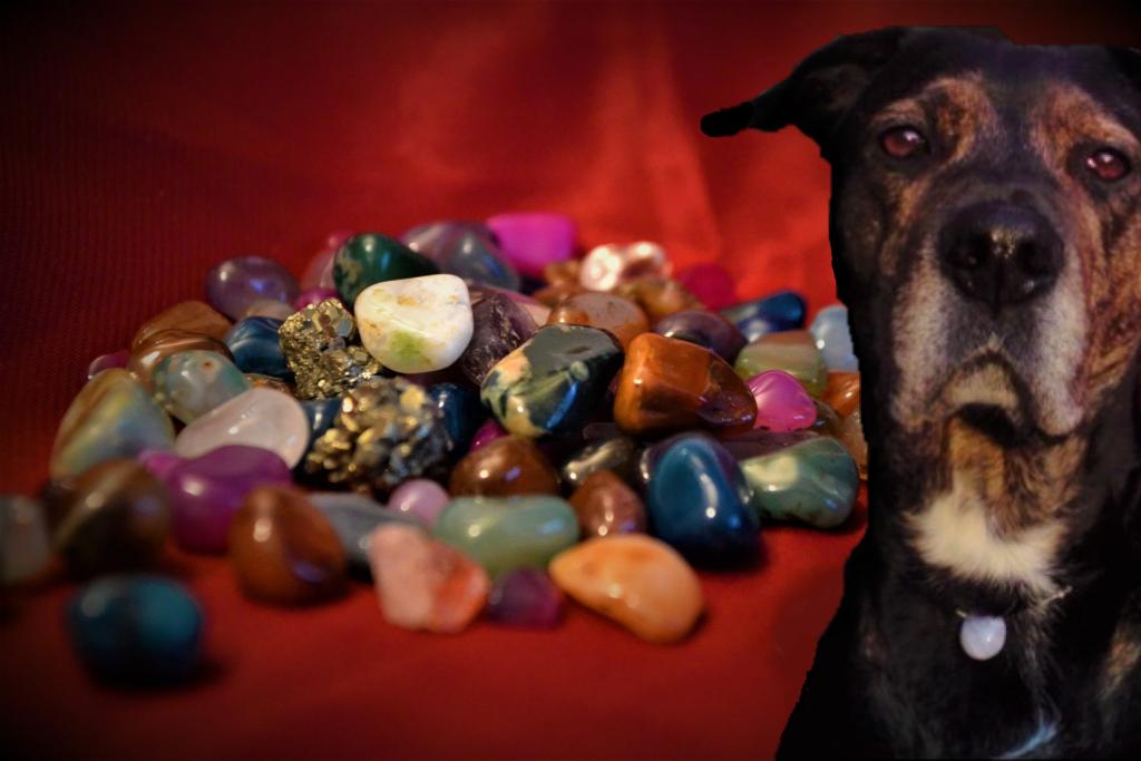 Bienfaits des pierres sur le chien