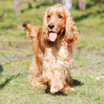 Promener un chien sans laisse : ce que dit la loi