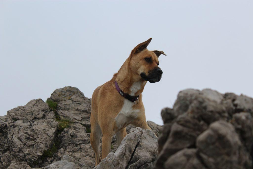 chien sans laisse et sanctions
