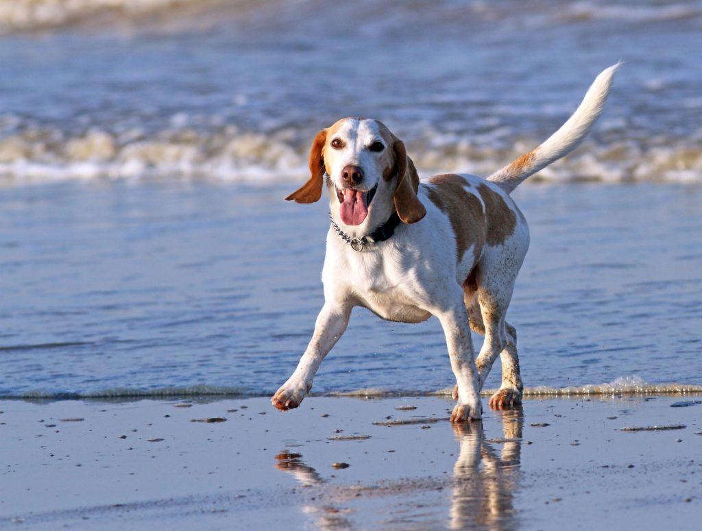 Réglementation chiens en laisse ou sans laisse