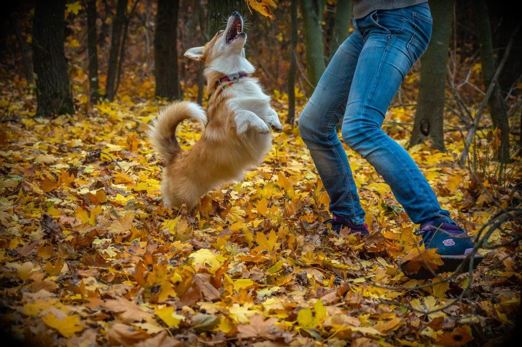 Modifier l'émotion de son chien positivement grâce au YOUPI
