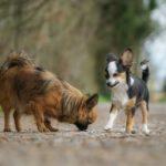 Sociabilisation : le chien juvénile et en puberté
