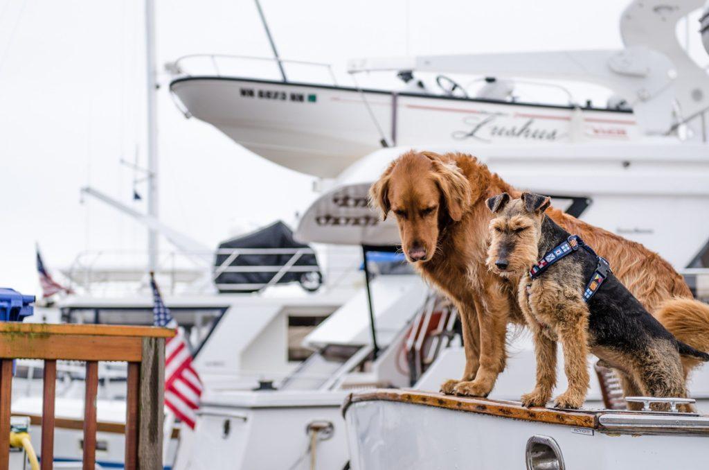Sociabilisation jeune chien transport