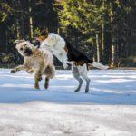 Gérer une bagarre et séparer deux chiens qui se battent