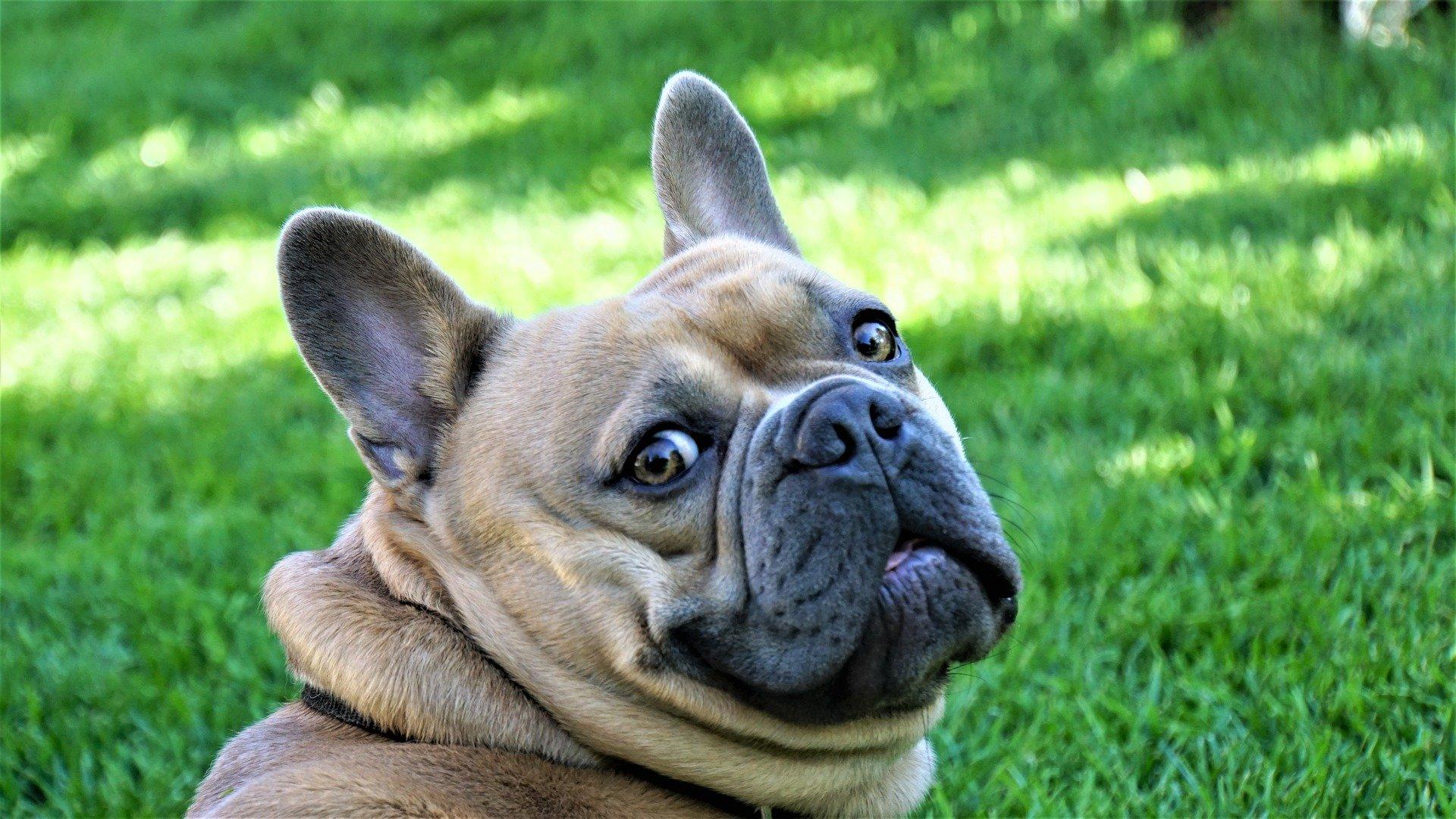 Comment dédramatiser une situation stressante pour son chien