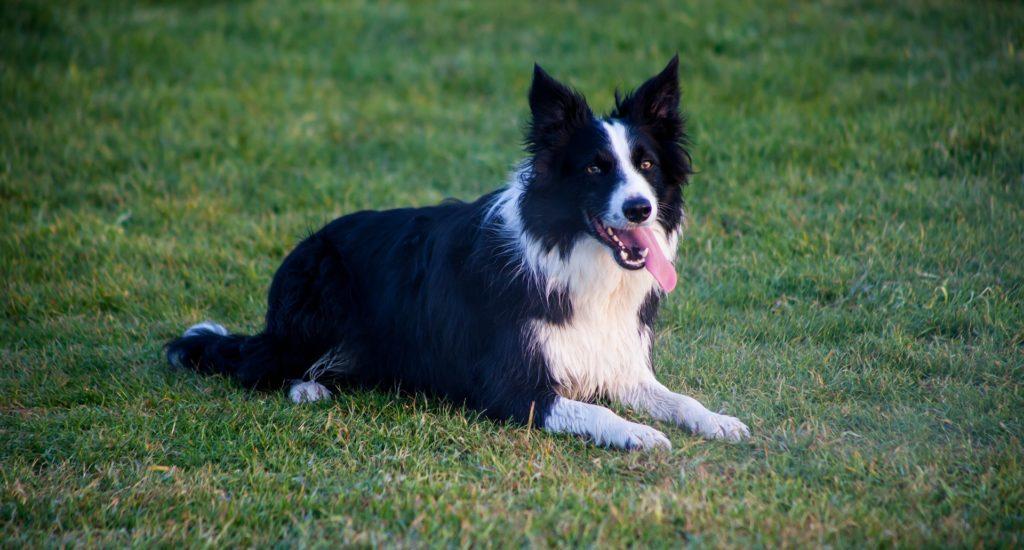 Comment et pourquoi apprendre la commande à ta place à un chien