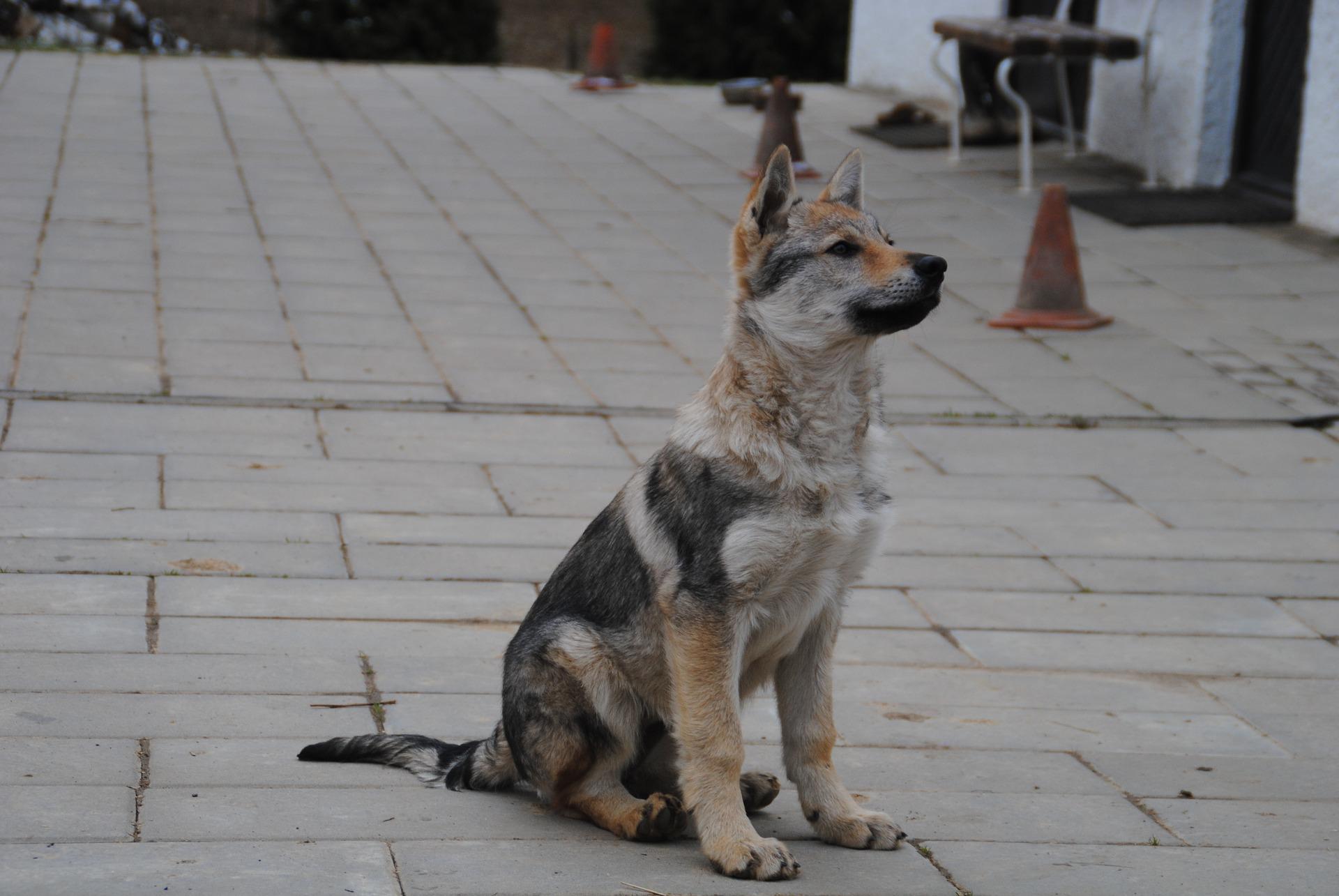 Sécuriser son chien en extérieur grâce à la commande à ta place