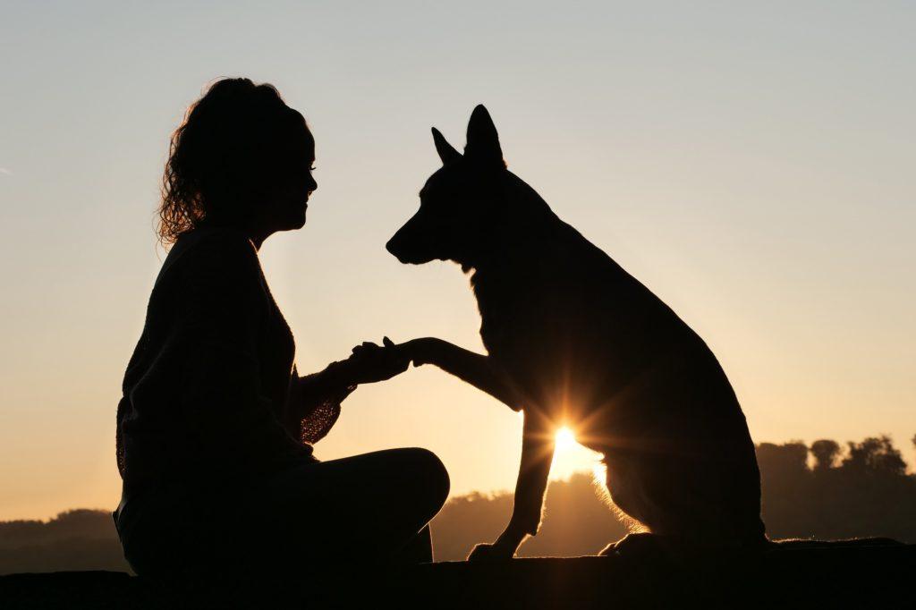 Les besoins fondamentaux de l'humain sont-ils vraiment différents de ceux des chiens