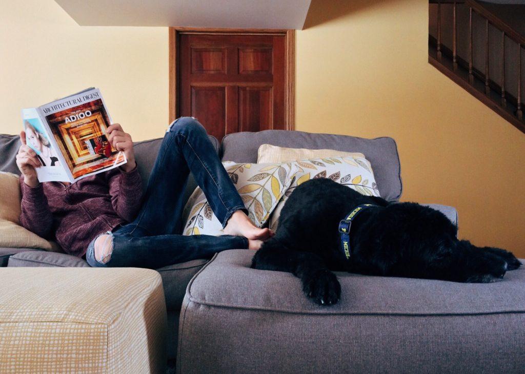 Covid-19 et confinement : occuper son chien