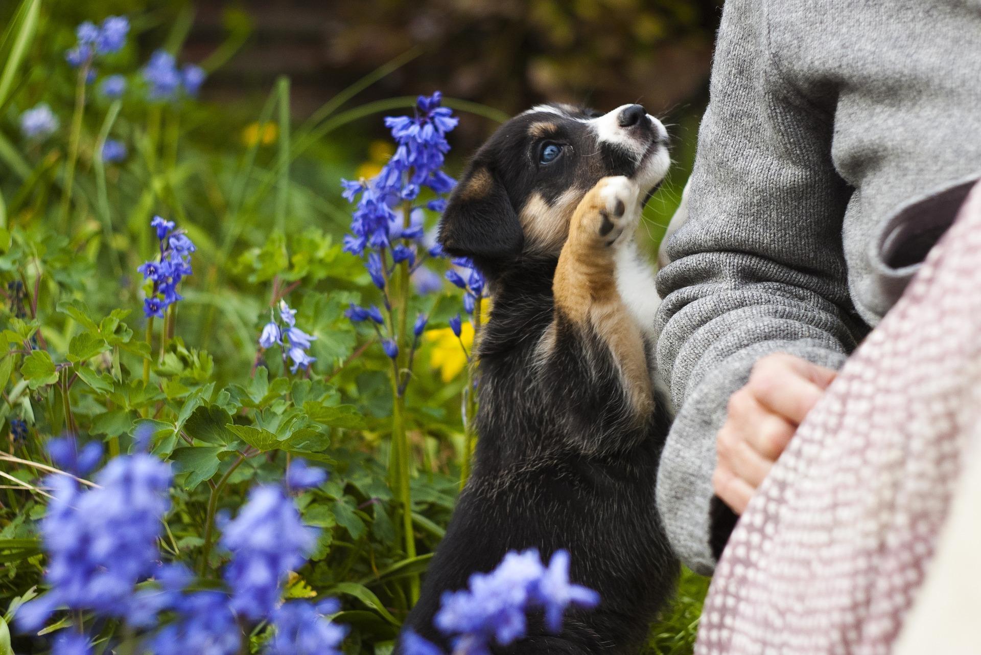 Comprendre le besoin d'attention du chien