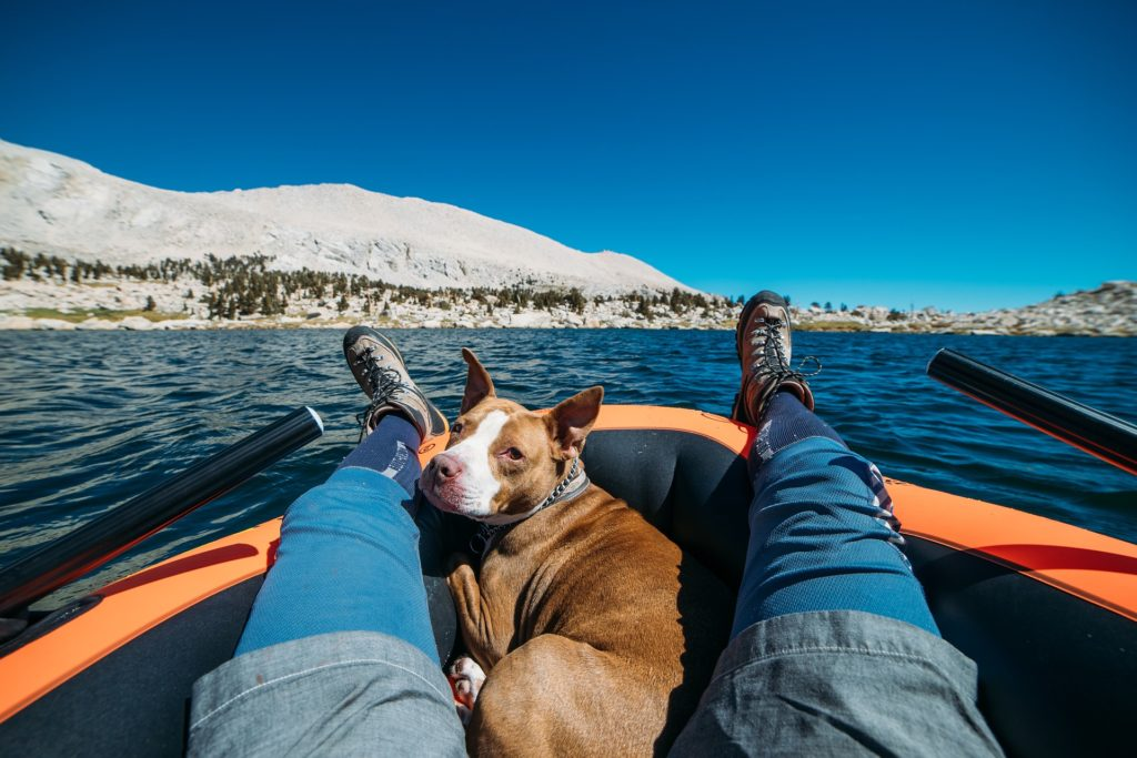 Naviguer avec un chien : rêve ou réalité ?