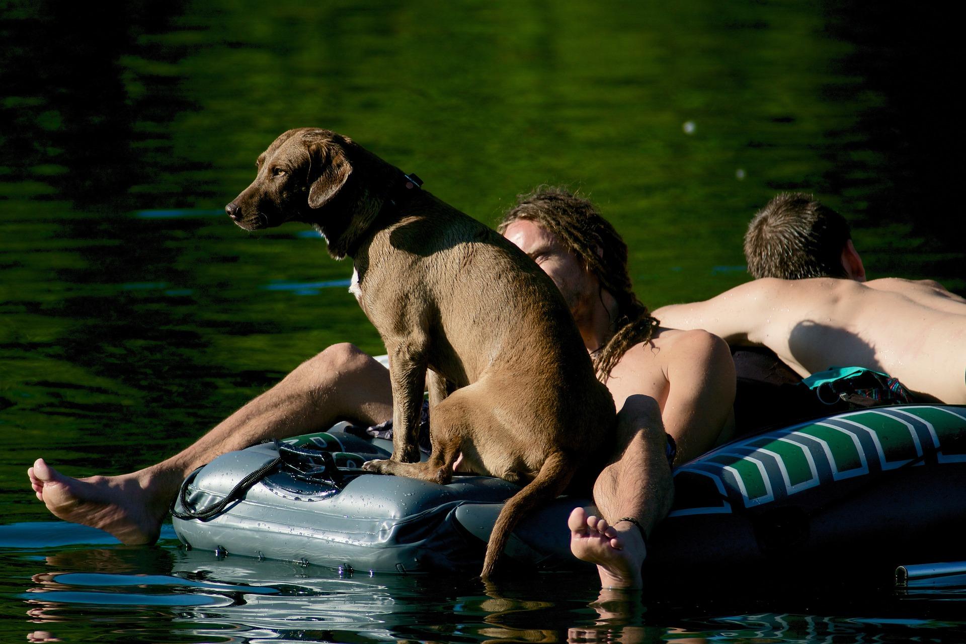 Matériaux idéaux pour le kayak de son chien et soi