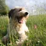 Remplacer les antiparasitaires par du naturel pour un chien